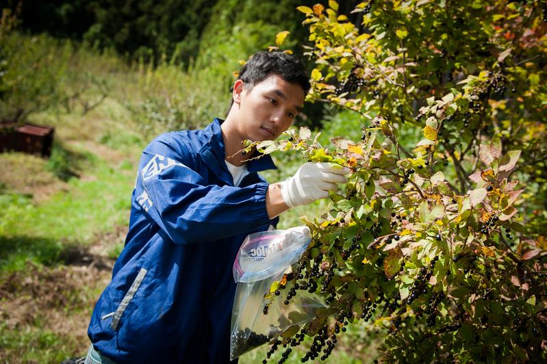 阿牧(古偉牧)以綠色和平核輻射專家身份,2013年在福島的郡山市進行採樣。© Noriko Hayashi / Greenpeace