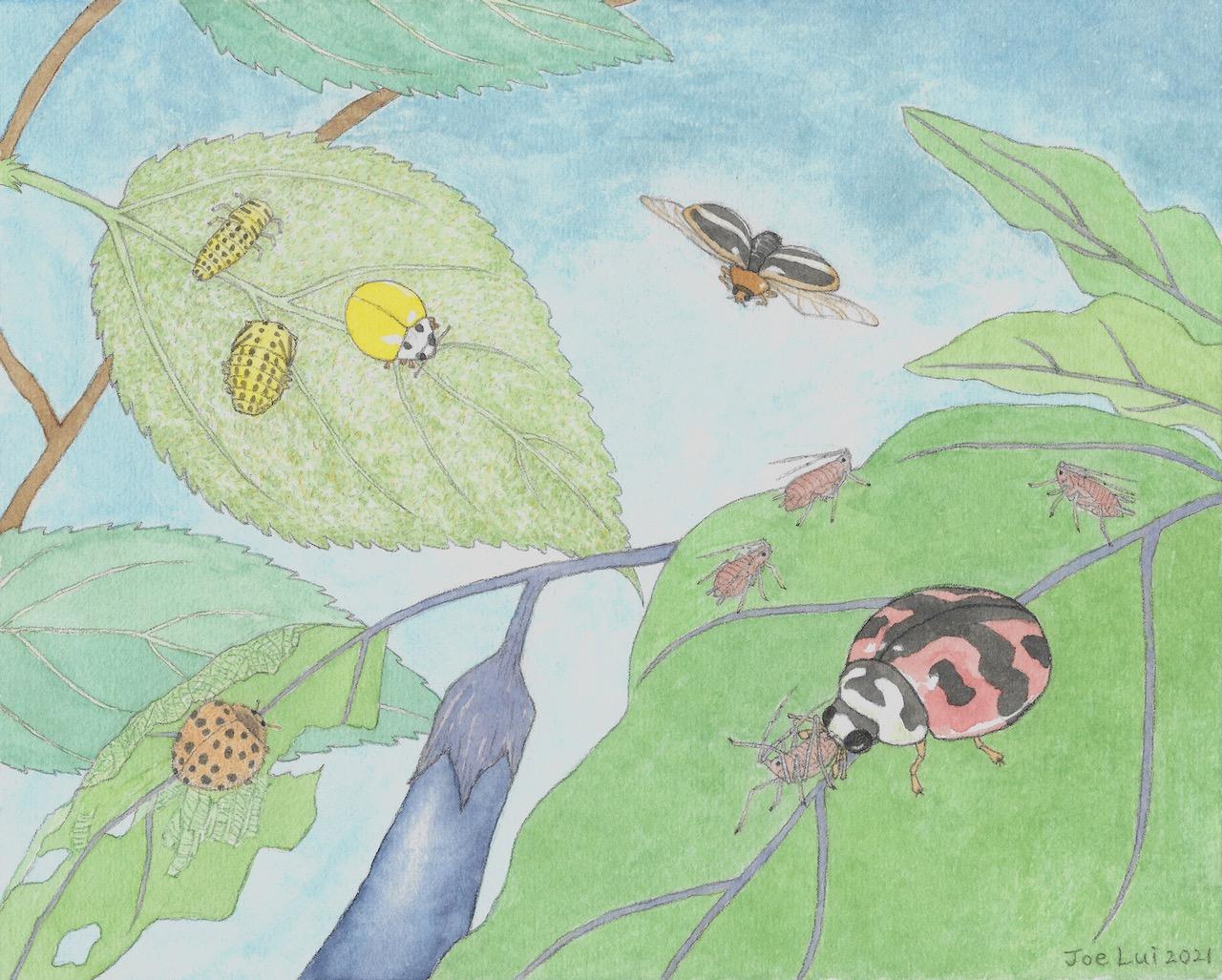 【動物傳心師】聖母差遣來的瓢蟲 © 呂朗婷