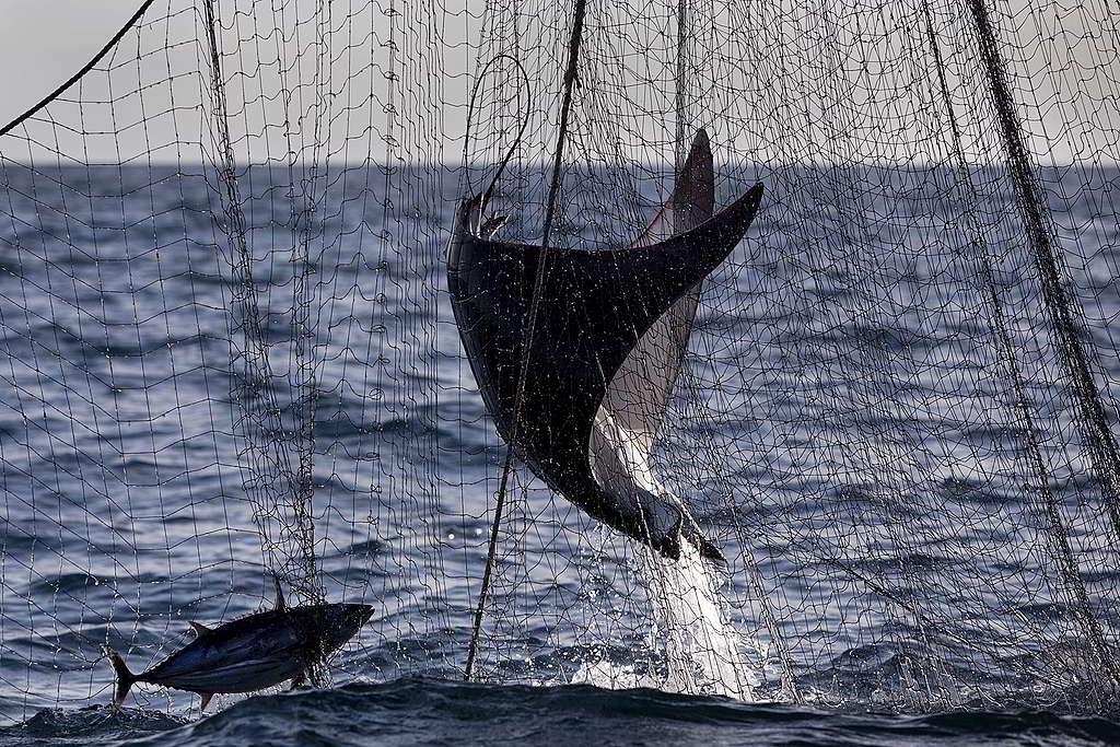 海洋需要強而有力的制度保護──杜絕破壞漁法及過度捕撈,不僅保護海洋生態,也是保障沿海居民的生計。 © Abbie Trayler-Smith / Greenpeace