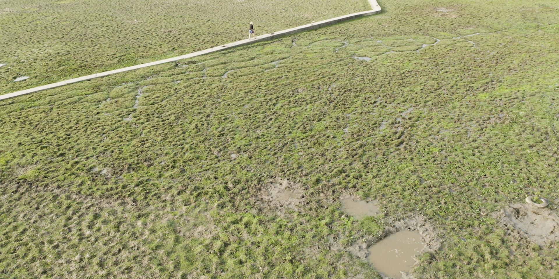 貝澳淡水濕地。 © FHS