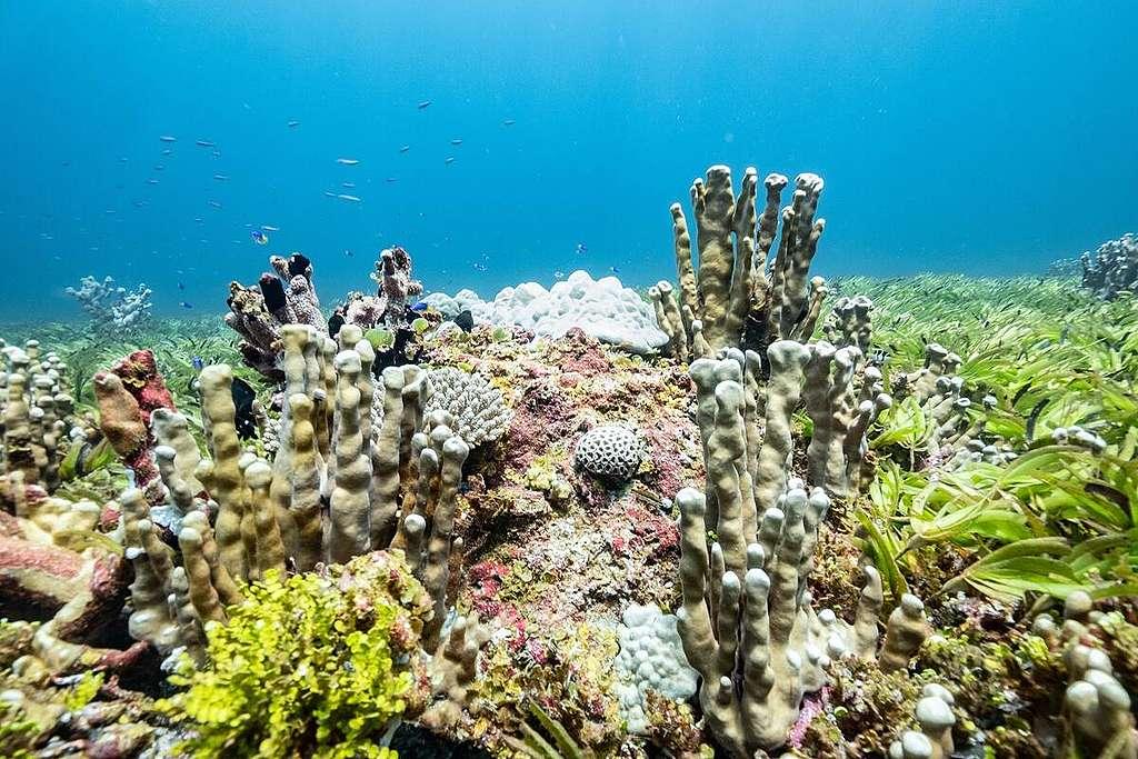 海草床是重要的海洋生態系統。2021年綠色和平極地曙光號到印度洋,了解該區的海洋生態,讓公眾及各地政府明白守護海洋的價值。© Tommy Trenchard / Greenpeace