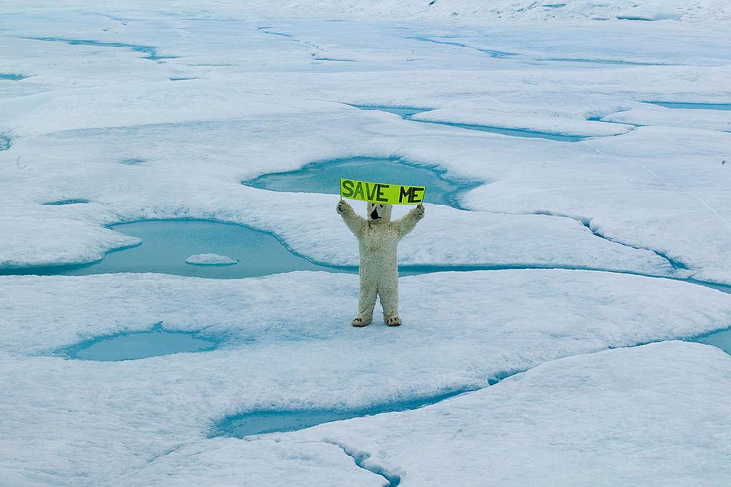 2005年,一身北極熊打扮的綠色和平行動者在格陵蘭浮冰上高舉「SAVE ME」標語,促請各國領袖凝聚共識,拯救北極熊生境。 © Greenpeace / Steve Morgan