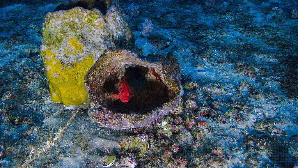 45:這張珊瑚礁照片,看似毫不起眼,它卻是綠色和平船艦希望號2017年首次揭開亞馬遜珊瑚礁神秘面紗的第一手影像見證。綠色和平持續守護這片生態寶庫,成功促使多間石油企業宣佈撤出珊瑚礁,解除漏油威脅。 © Greenpeace