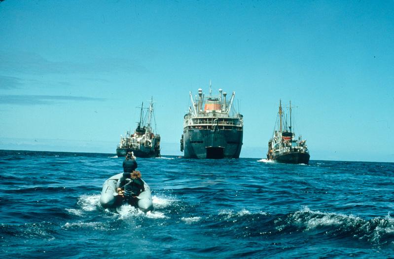 綠色和平Zodiac於北太平洋正在靠近蘇聯捕鯨船,Dalniy Vostok及捕鯨叉魚船。© Greenpeace / Rex Weyler