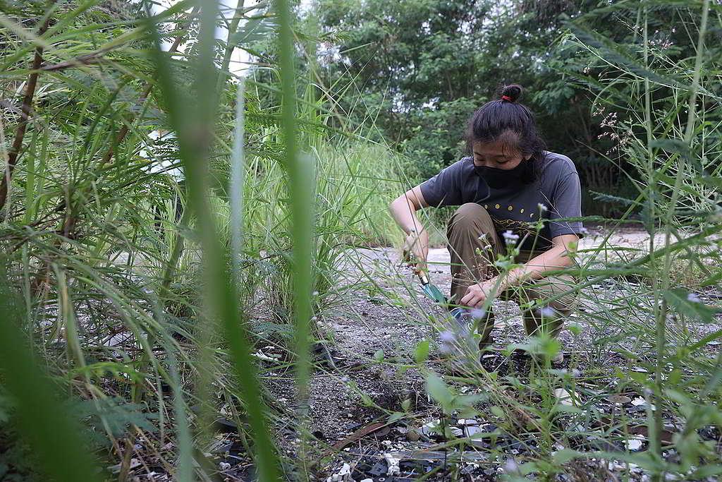 綠色和平8月初到多個棕地取樣化驗重金屬含量,多個數值均超出土壤污染標準。 © Greenpeace / Harry Long