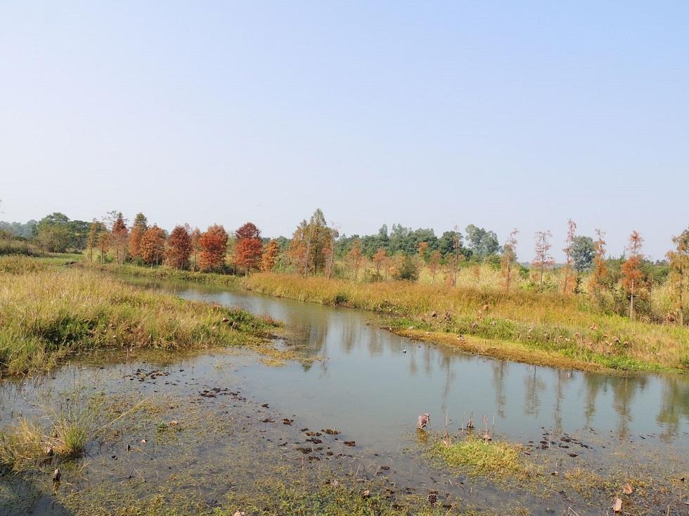 目前因疫情停止開放的濕地公園,從前拍下的冬日落羽杉。© helen yip
