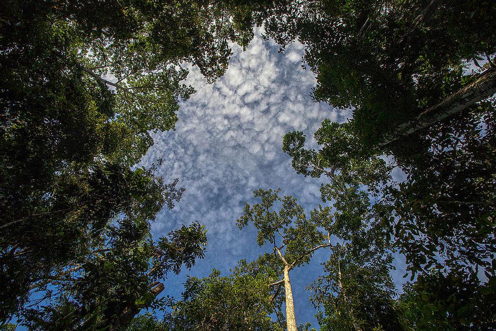 印尼西巴布亞擁有高度生物多樣性的熱帶雨林© Jurnasyanto Sukarno / Greenpeace