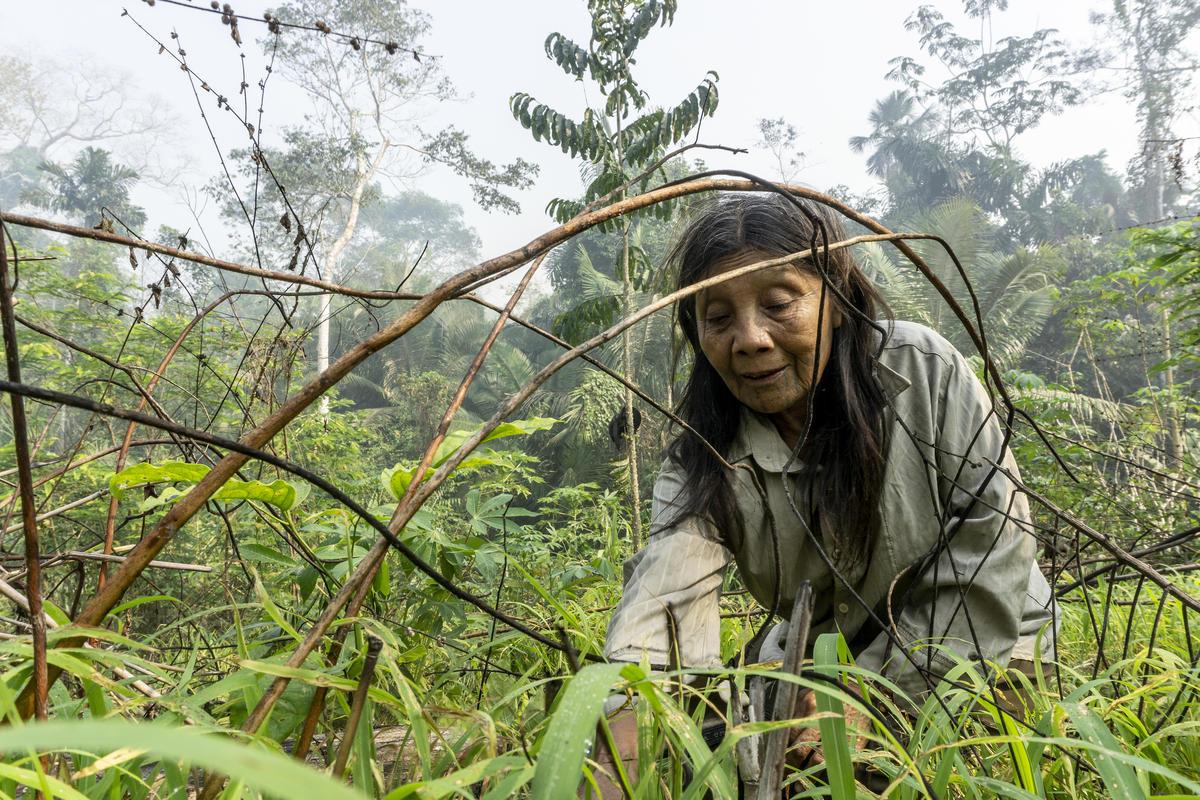 Katiká Karipuna婆婆悉心照顧社區中一片小土地。亞馬遜原住民需要自己狩獵、釣魚和耕種,才可獲得所需食物。 © Rogério Assis / Greenpeace