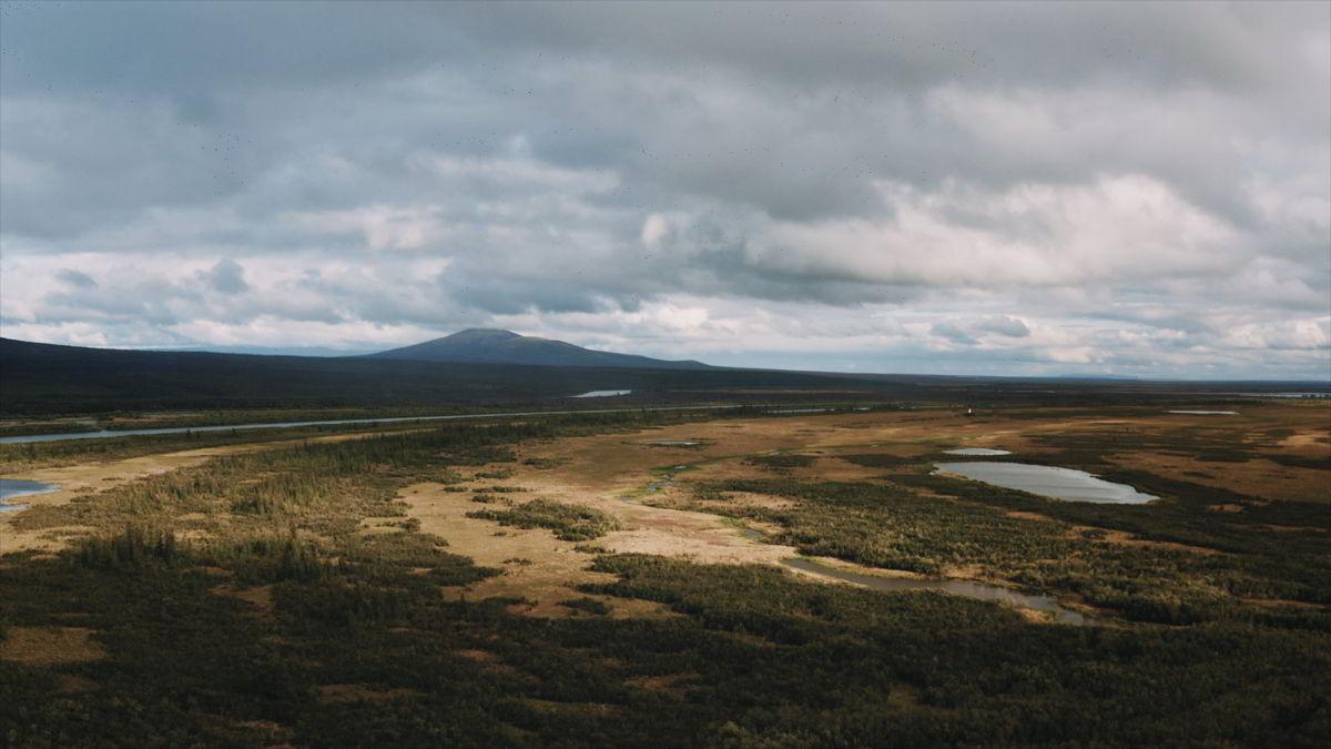 「回春」景象對北極苔原而言並非好事,因為這代表永久凍土融化與全球暖化陷入惡性循環。 © Alexander Fedorov