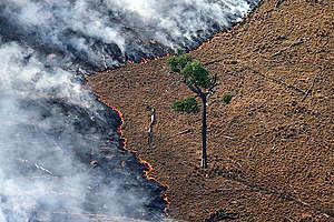 Burning Pasture in Amazon. © Greenpeace / Rodrigo Baléia