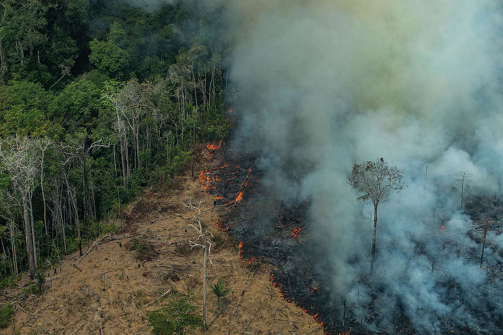 Forest Fires in Candeiras do Jamari, Amazon - Second Overflight (2019). © Victor Moriyama / Greenpeace