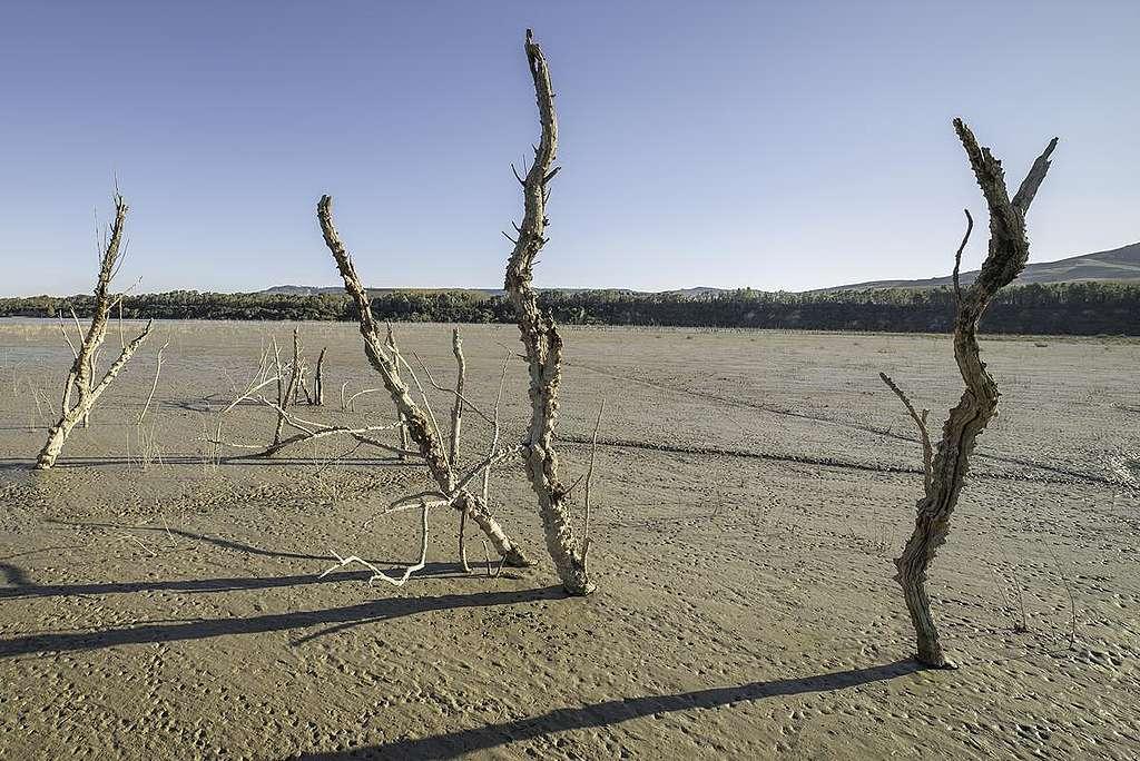 Drought in Basilicata, Italy. © Giuseppe Lanotte / Greenpeace