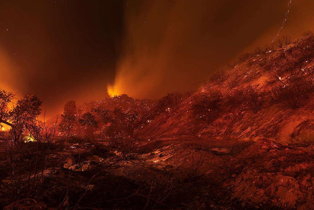 California Pine Canyon Wildfire. © David McNew / Greenpeace