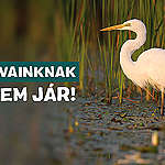 Greenpeace Hungary challenges in court the huge investment destroying nature at Lake Fertő