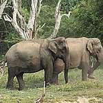 World Elephant Day: A Jumbo Conflict