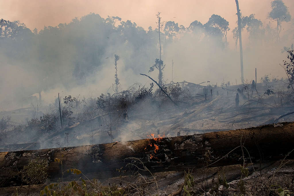 Forest Fires in Indonesia. © Vinai Dithajohn
