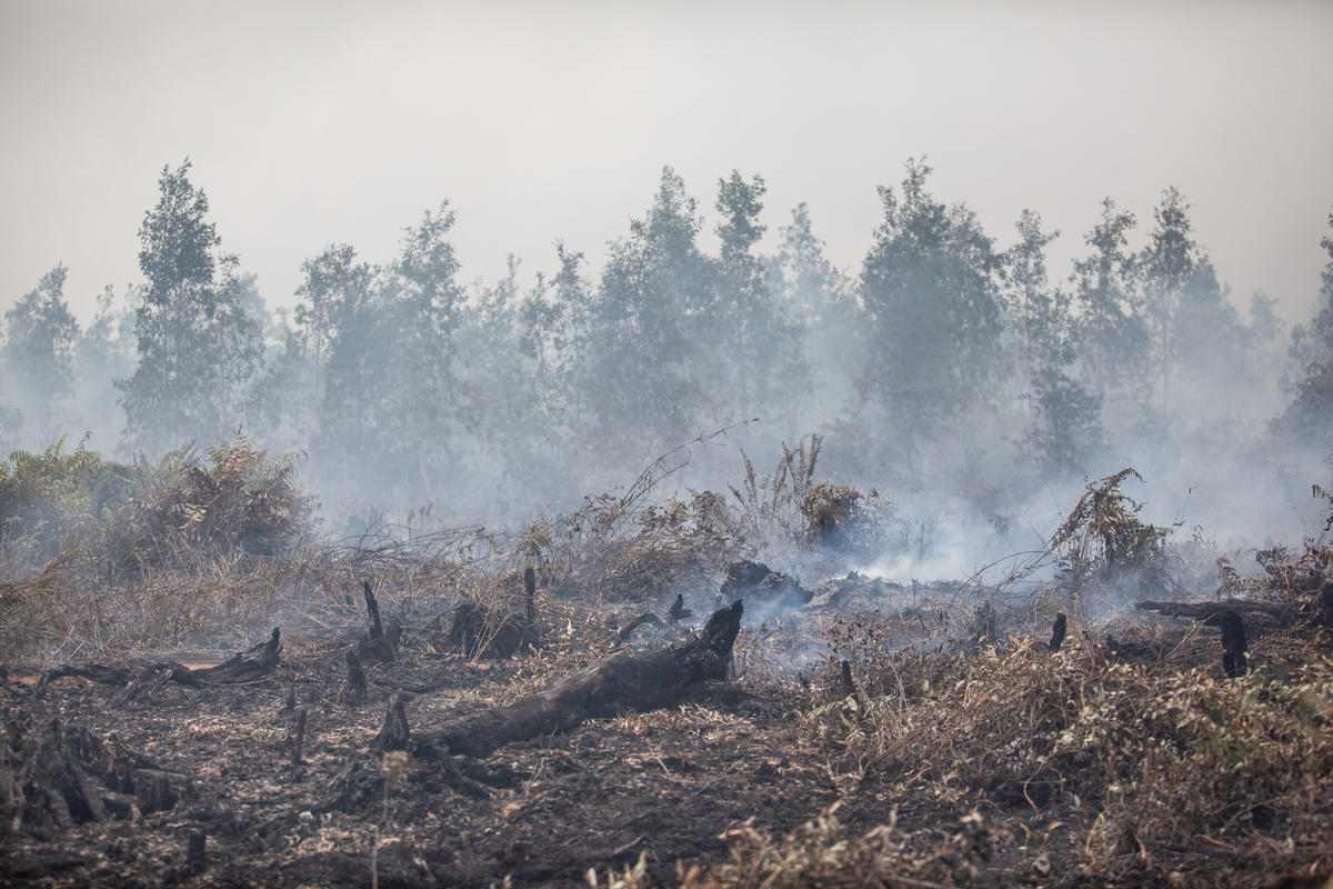 Forest Fires at PT GAL Concession in Central Kalimantan. © Jurnasyanto Sukarno / Greenpeace