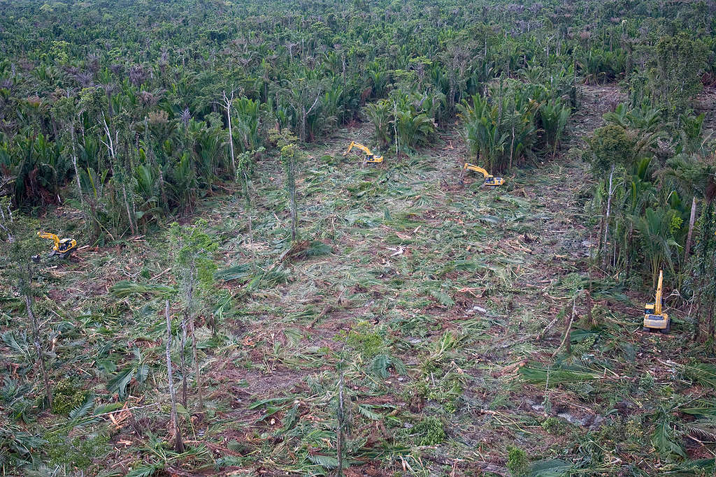 Forests Destruction in Papua. © Greenpeace / Ardiles Rante