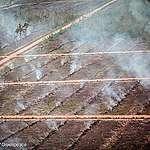 Publik Menunggu Tindak Lanjut atas Dugaan Pembakaran Lahan di Papua