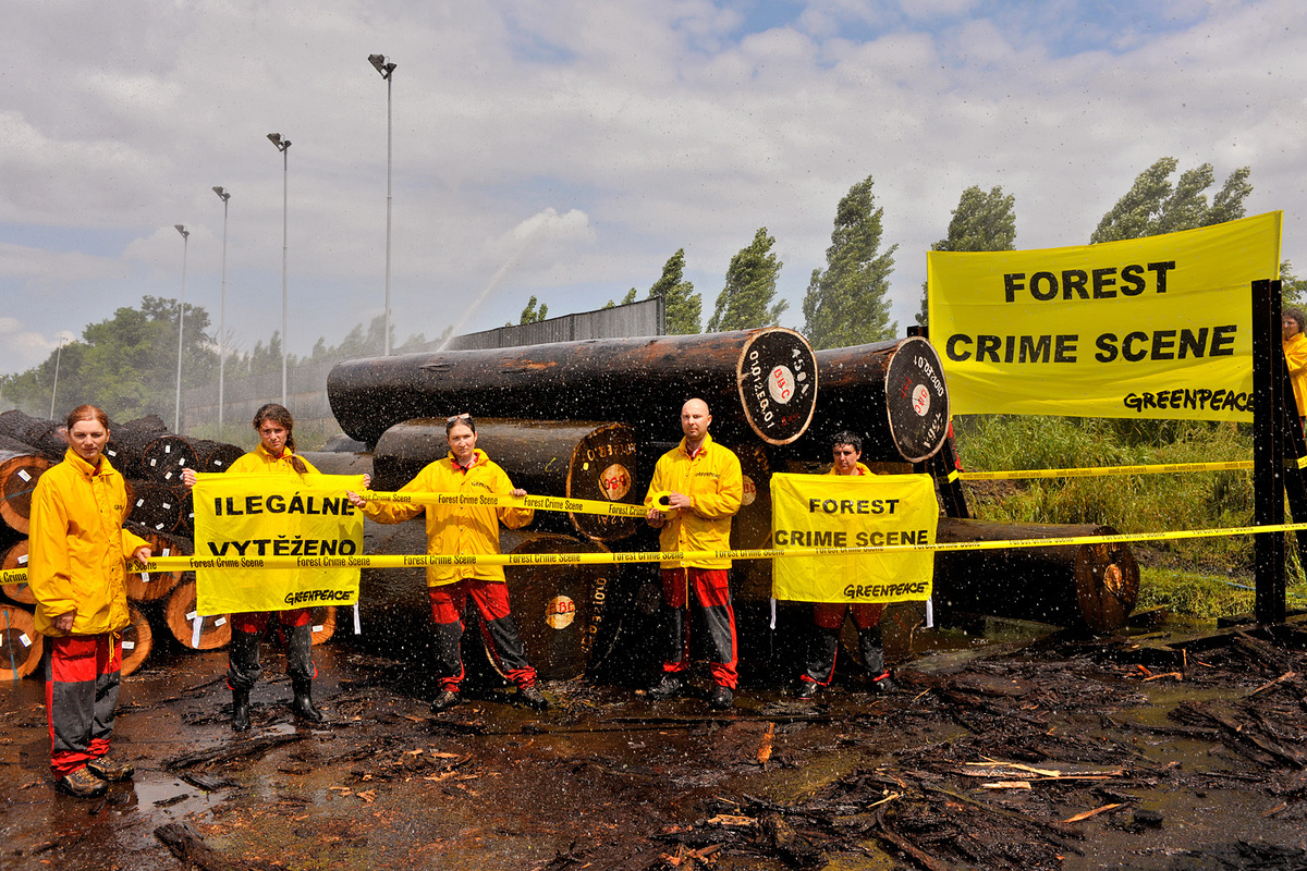 Czech Activists Uncover Illegal Logs from DRC © Ibra Ibrahimoviç / Greenpeace