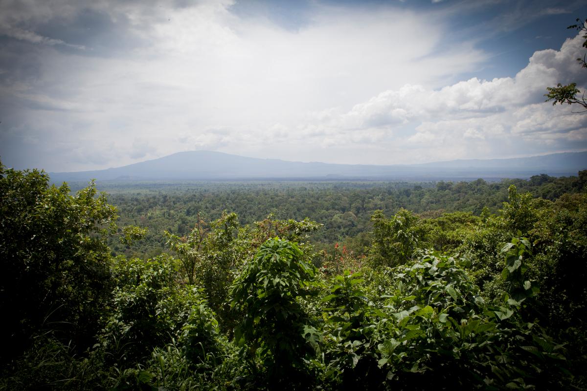 Virunga National Park in DRC © Greenpeace / Jan-Joseph Stok