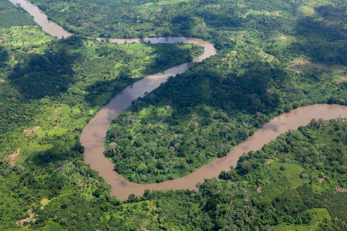 Coastal Rainforest in Cameroon © Greenpeace / Alex Yallop
