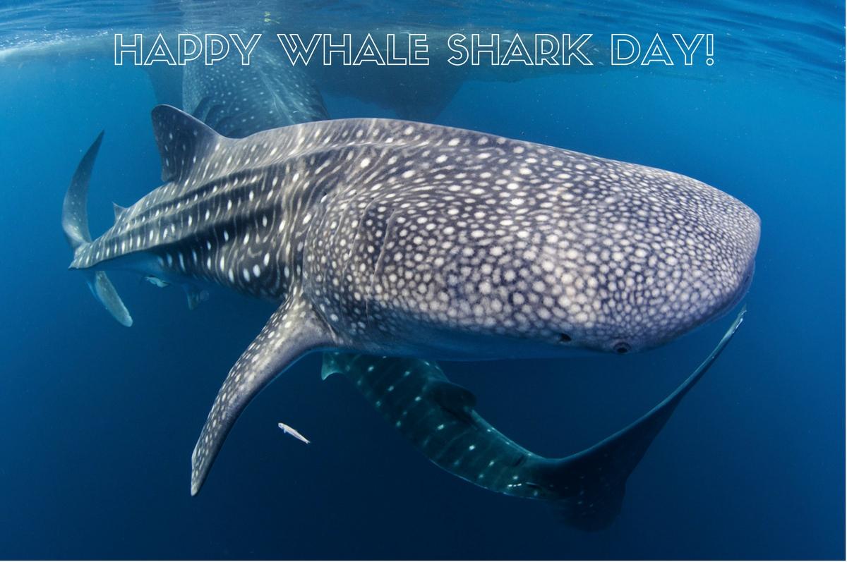 Whale Shark Day