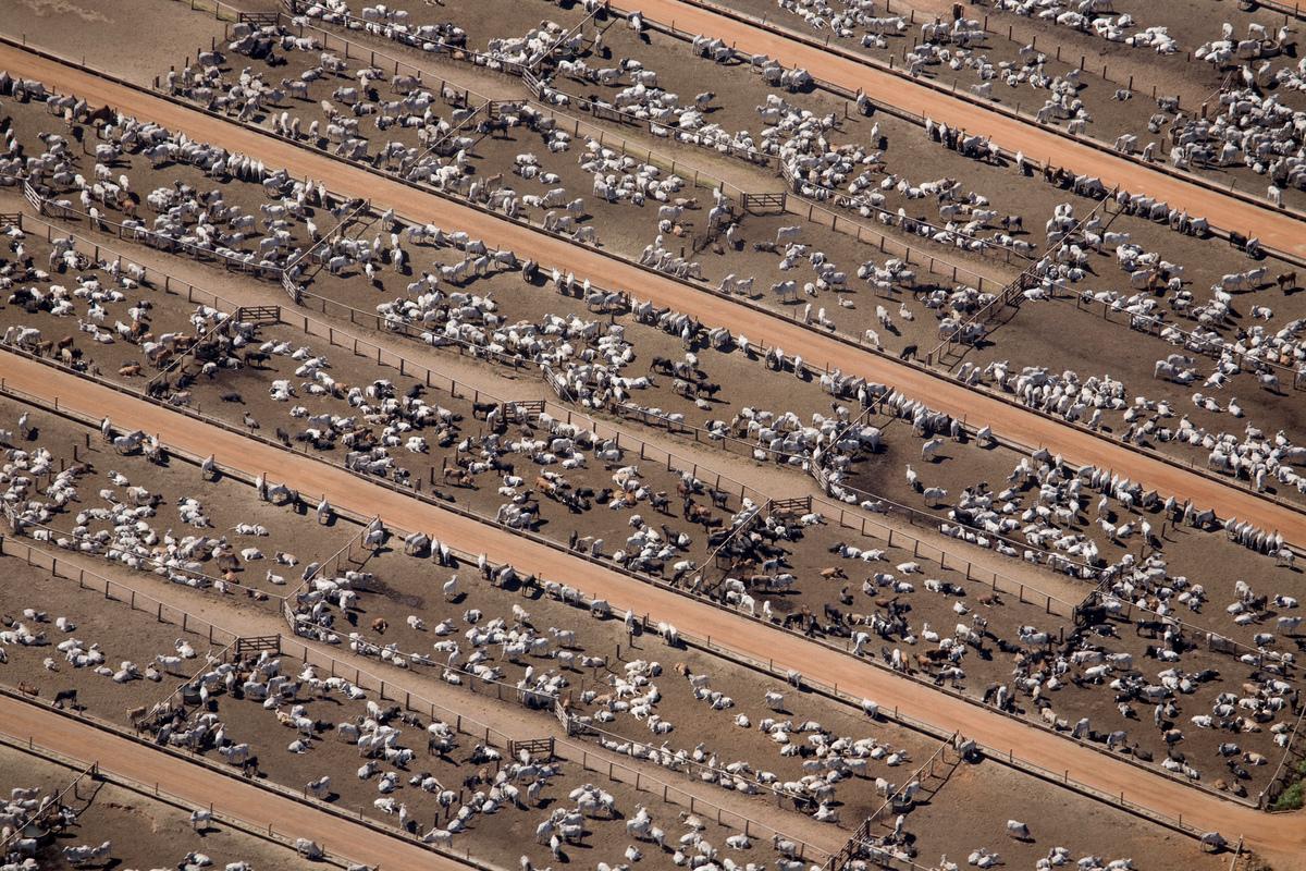 Cattle Farm in the Amazon © Greenpeace / Daniel Beltrá