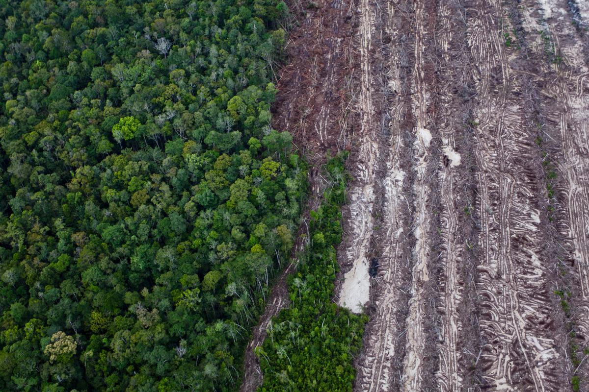 Deforestation in Central Kalimantan © Ulet Ifansasti / Greenpeace