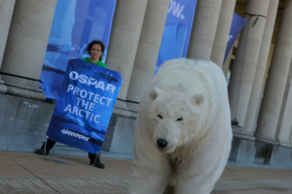 Polar Bear at OSPAR Meeting in Ostend © Pedro Armestre / Greenpeace