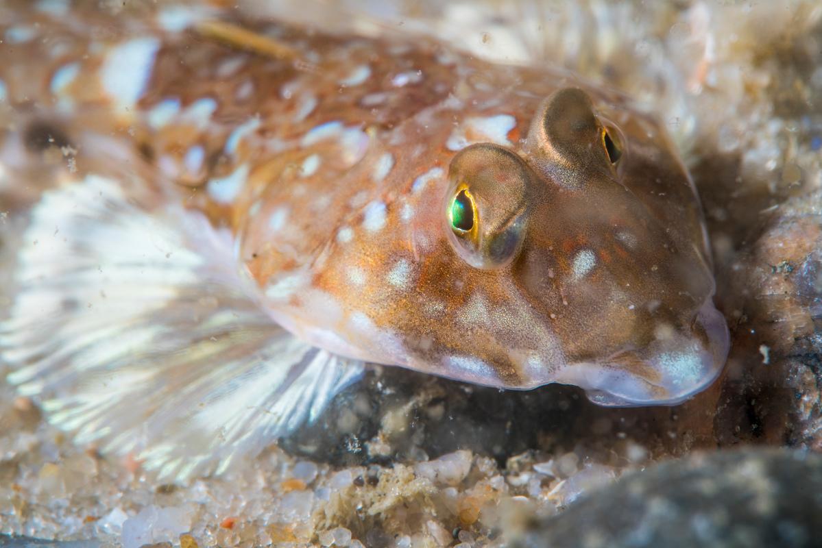 Underwater Sea Life off Sylt © Uli Kunz / Greenpeace