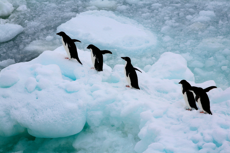 Adelie Penguins in the Southern Ocean © Jiri Rezac / Greenpeace