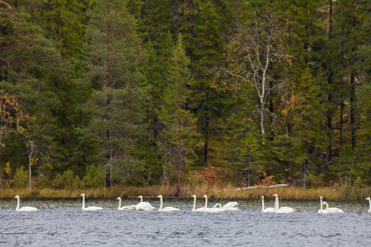 Beauty of Dvinsky Forest in Russia Arkhagelsk Region © Igor Podgorny / Greenpeace