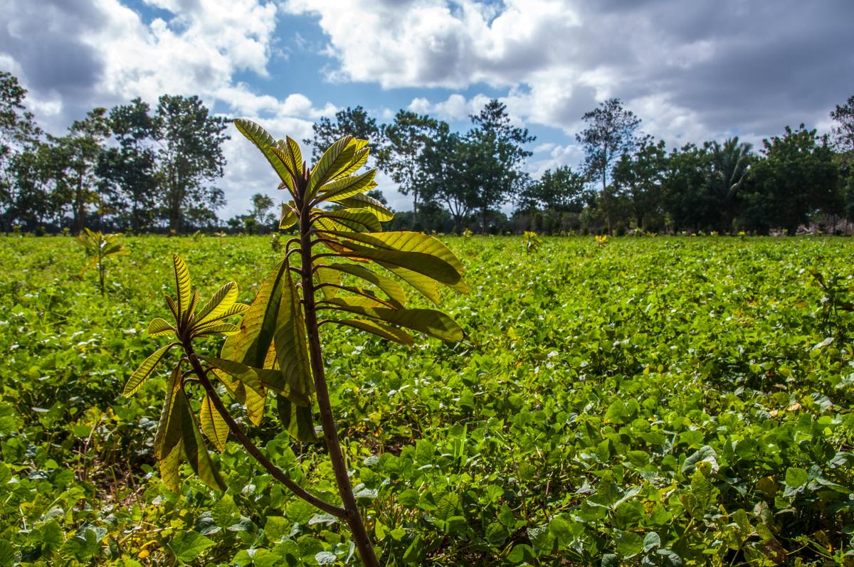 Mayan Community Visits Finca  © Anaray Lorenzo / Greenpeace