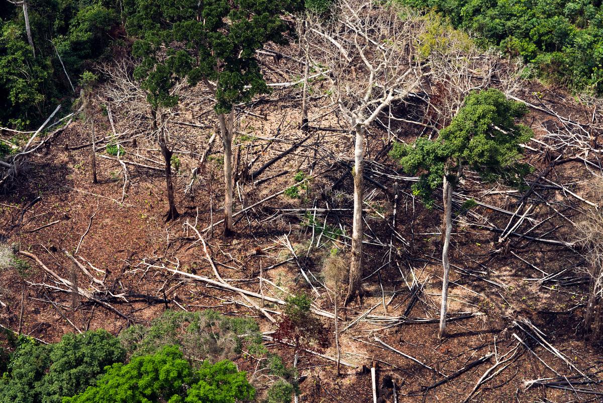 Peatland Forest in DRC © Daniel Beltrá / Greenpeace