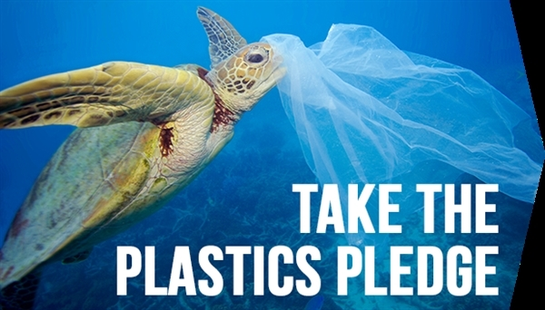 Underwater image of turtle with plastic bag. 10 March, 2006 © Troy Mayne / Oceanic Imagery Publications