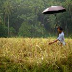 Ecological Agriculture Farm in Sorsogon © Nathaniel Garcia / Greenpeace