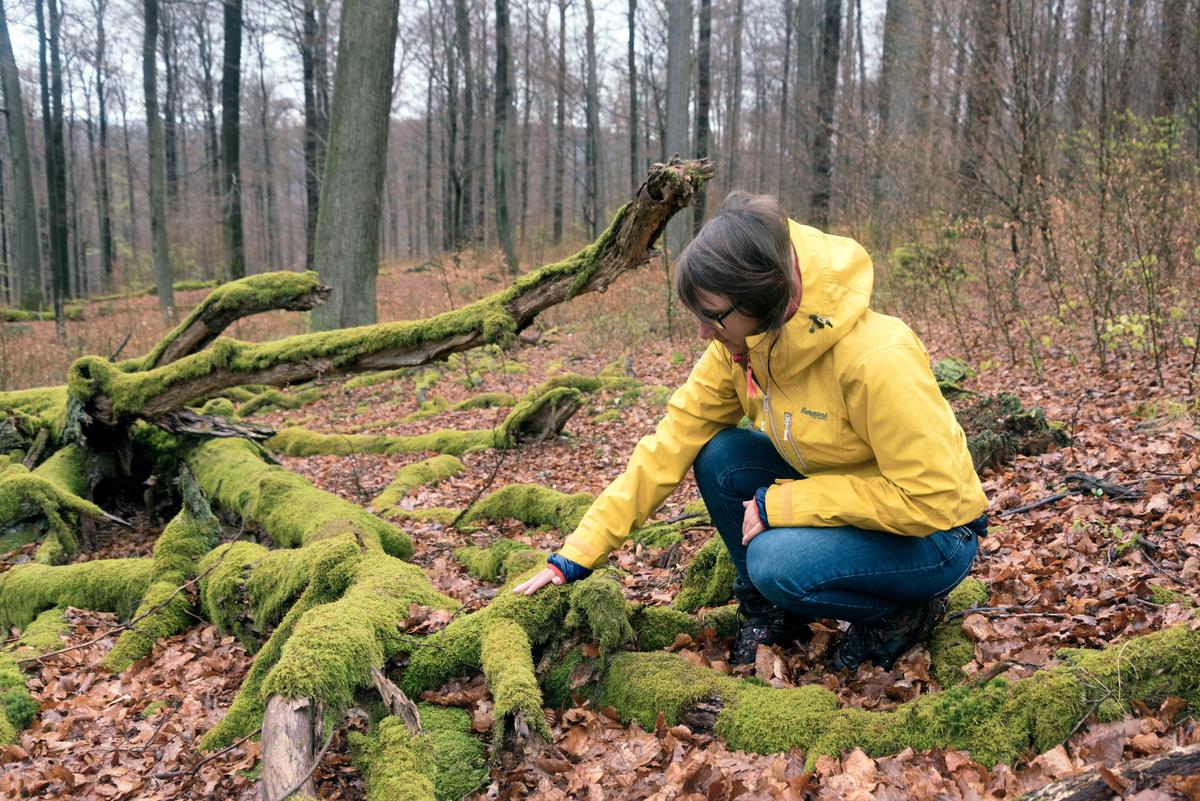 Hiking Tour through the Spessart Mountains © Andreas Varnhorn / Greenpeace