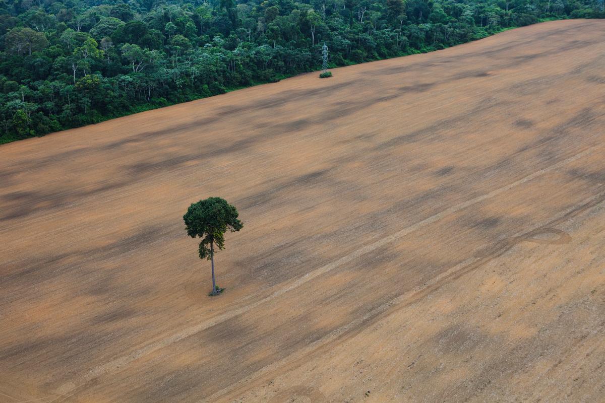 Deforested Area in the Amazon © Daniel Beltrá / Greenpeace