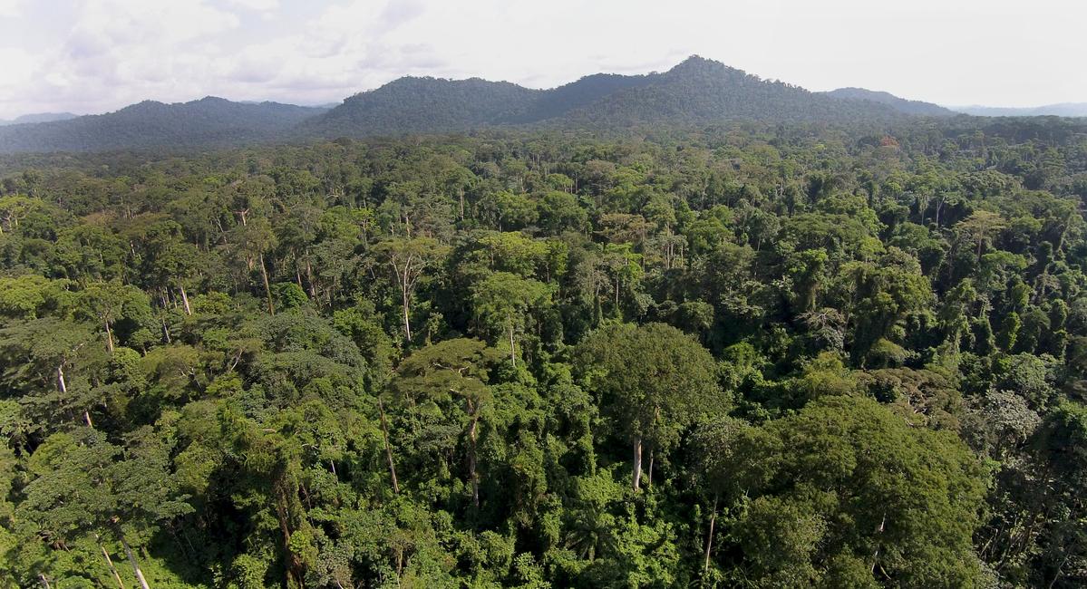 Forests in Cameroon © Greenpeace / John Novis