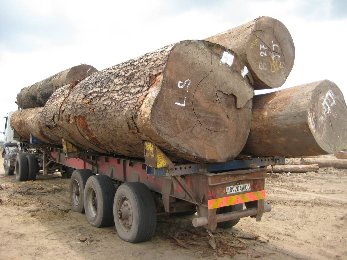 Unmarked timber on a truck in DRC © Greenpeace