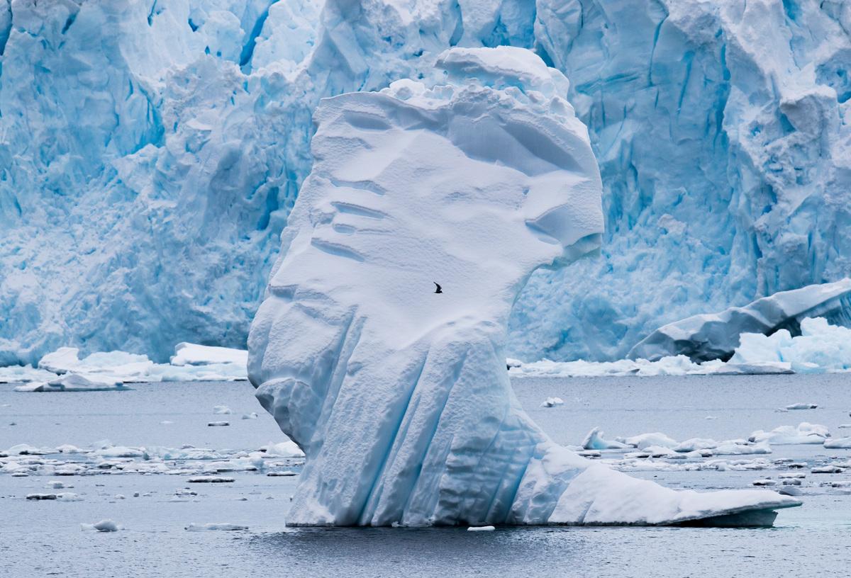 Seabird in Paradise Bay in the Antarctic © Paul Hilton / Greenpeace
