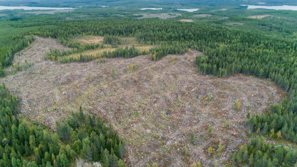 Lodgepole Pine Plantations and Clear Cut in Sweden © Christian Åslund / Greenpeace