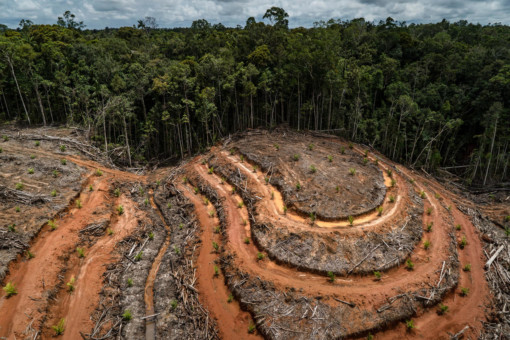 PT Megakarya Jaya Raya (PT MJR) Palm Oil Concession in Papua @ Ulet Ifansasti / Greenpeace
