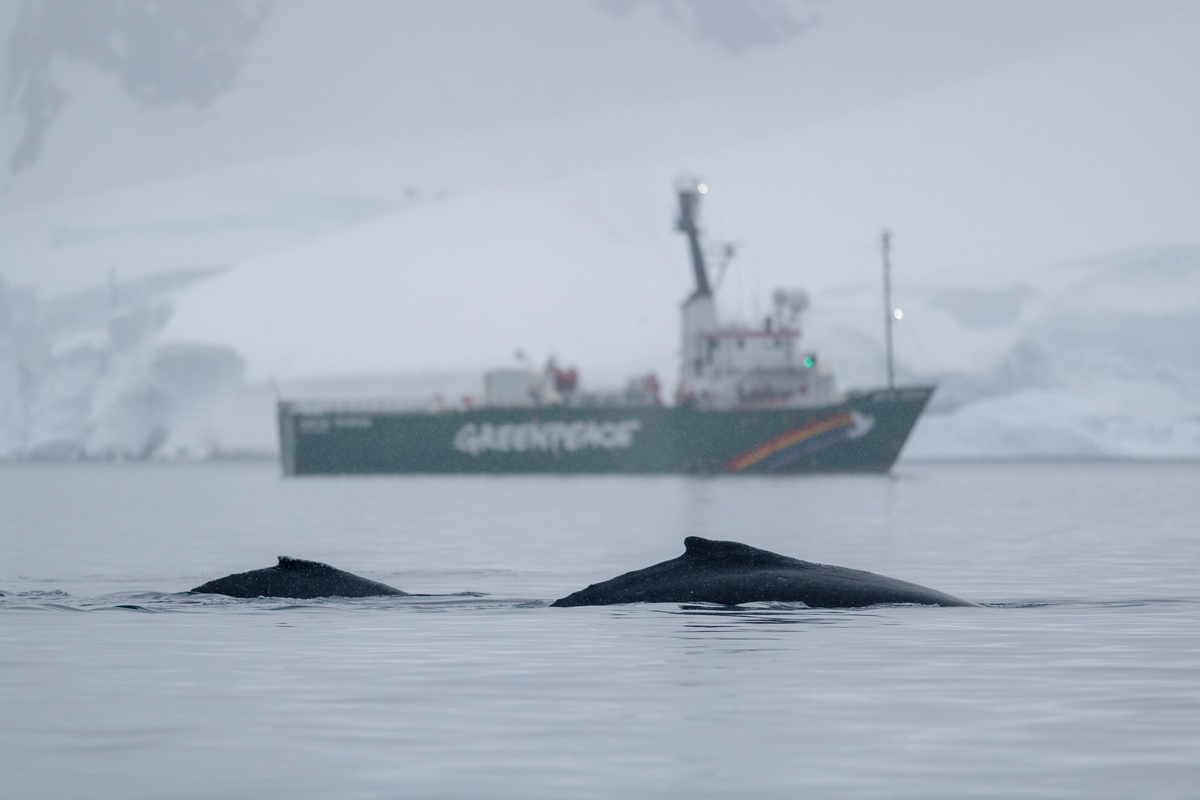 Humpback whale and calf in the Antarctic © Christian Åslund / Greenpeace