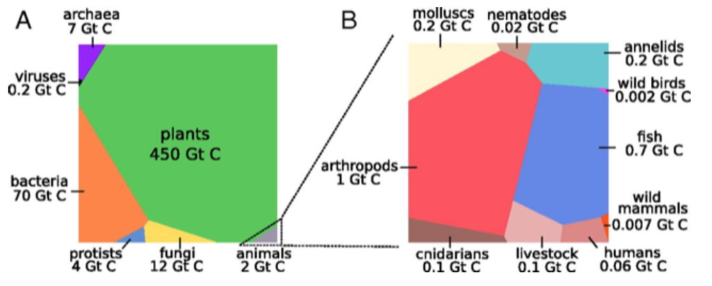 Voronoi diagram of global biomass distribution (used with permission from the Bar-On, Phillips, Milo census)