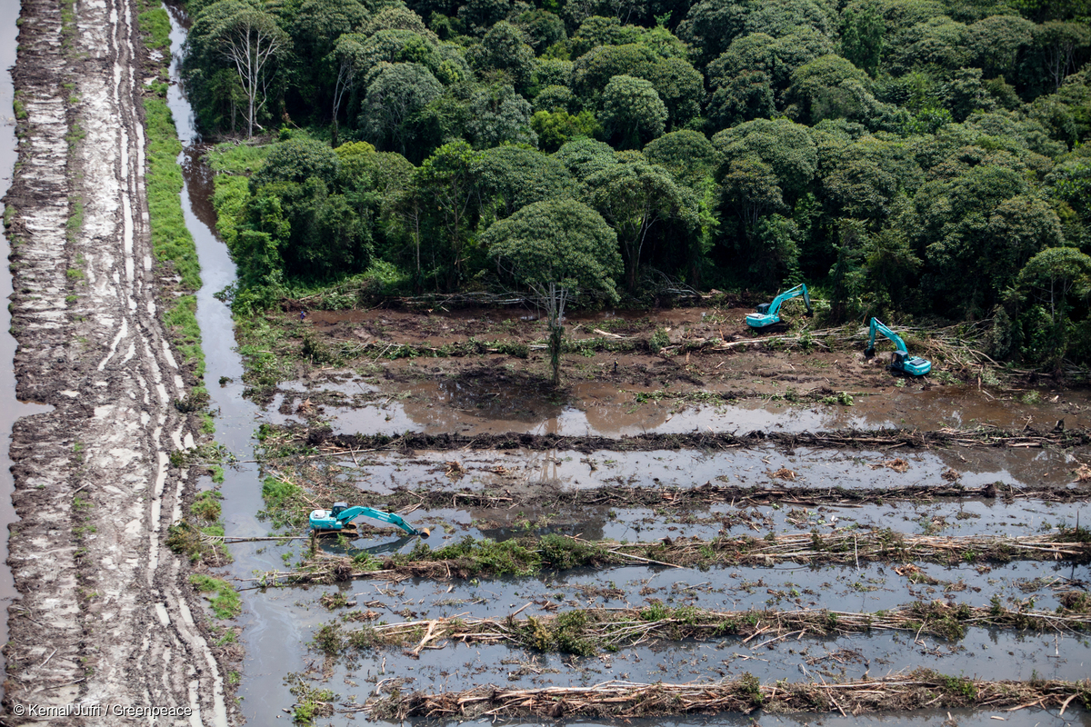 Deforestation for palm oil in Central Kalimantan © Kemal Jufri / Greenpeace