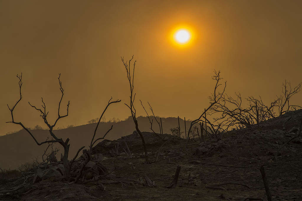 Wildfires swept through California this summer © David McNew / Greenpeace