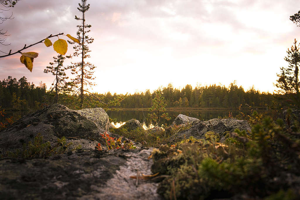 The beauty of the Great Northern Forest in Finland © Jonne Sippola / Greenpeace