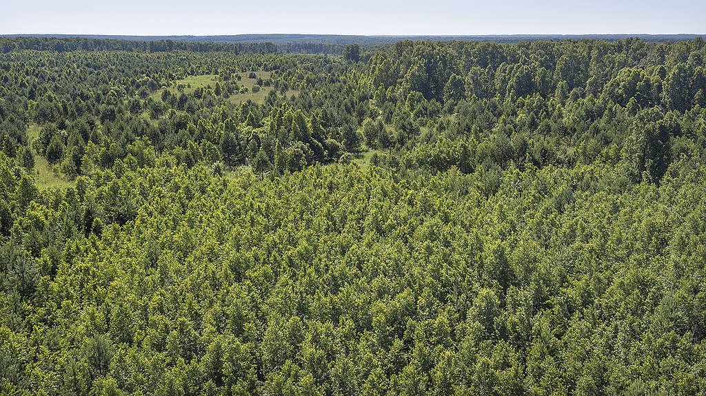 Russian Forest © Tatiana Khakimulina/Greenpeace
